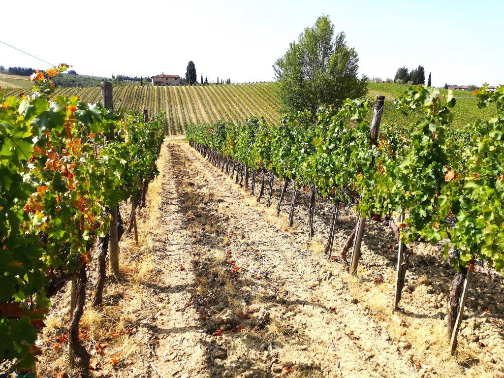 Un sorso di vino Ruffino nelle campagne del Chianti