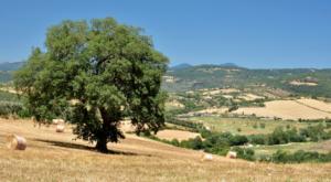 Alla scoperta della Toscana sui sentieri della via Francigena