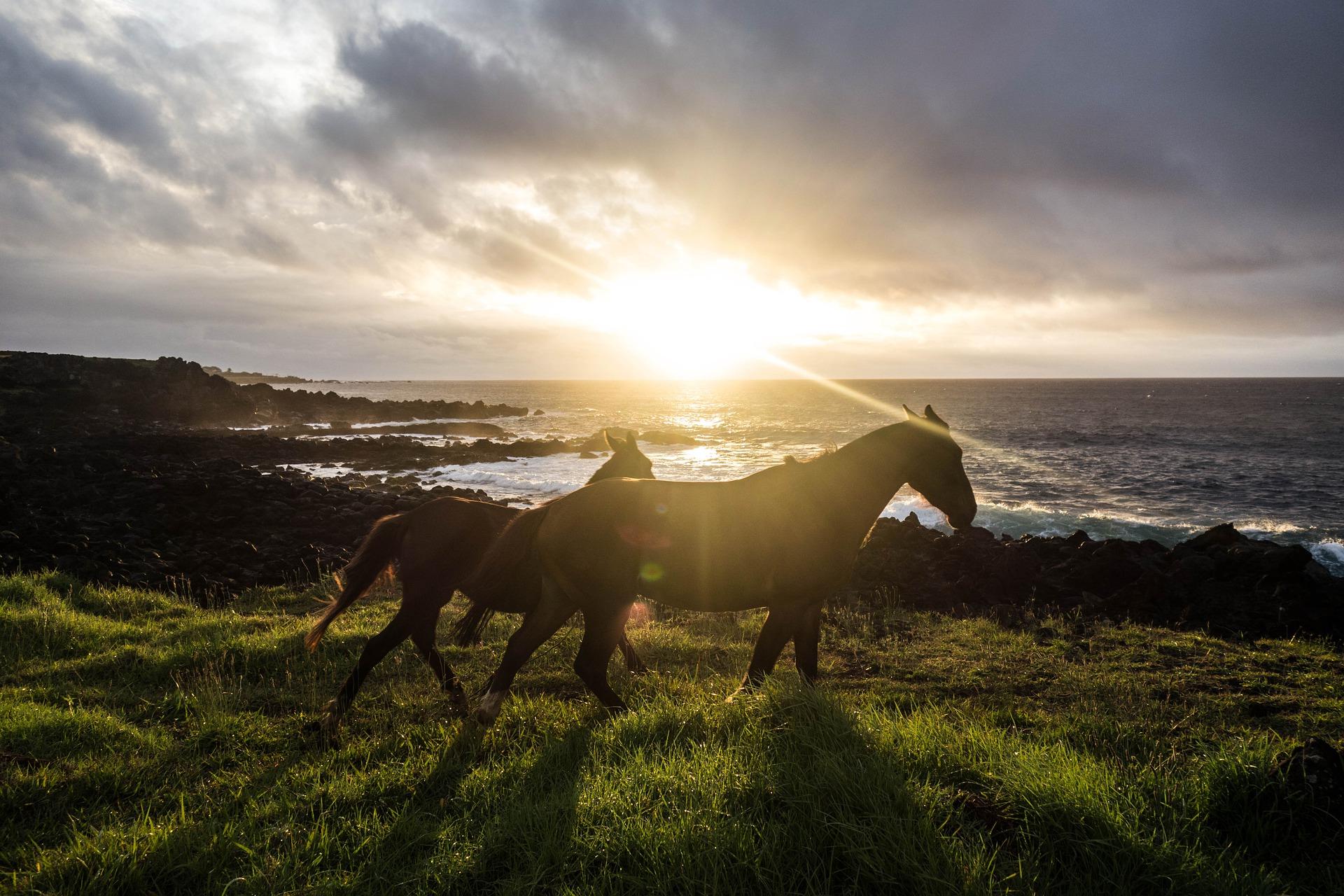 Passeggiate a cavallo nelle Marche