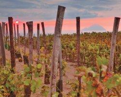 Degustazione vini e tour del vigneto a Lipari
