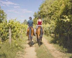 Passeggiata a cavallo nei dintorni di  Siena