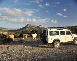 Escursione in fuoristrada a Orgosolo e pranzo con i pastori del Supramonte