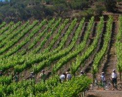 Tour in bici di Lecce con degustazione di vini e prodotti tipici