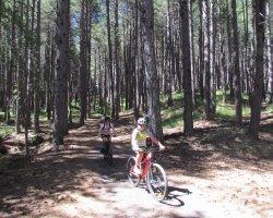 Etna bike tour con degustazione