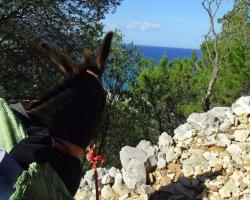 Trekking con gli Asini da Dorgali a Cala Gonone