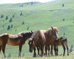 Vacanza in montagna e trekking a cavallo in Abruzzo