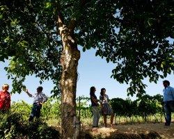 Degustazione dei vini dell'Etna e Cooking class