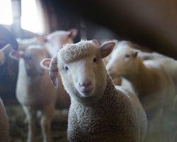 Attività per bambini in una fattoria con animali