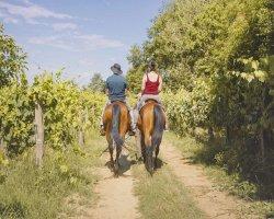 Passeggiata a cavallo in Puglia con aperitivo in masseria