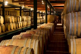 Independent tours of Langhe wines