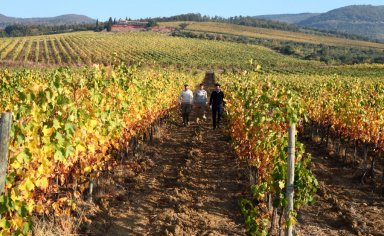 Trekking and tasting tour in the earth of Tuscany  Countryside
