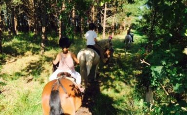 weekend full immersion with horses