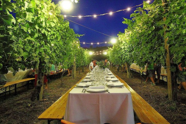 Wine tasting and dinner in a Chianti vineyard