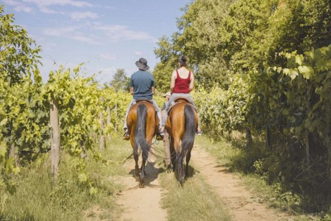 Valdichiana horse riding with winery picnic basket tasting