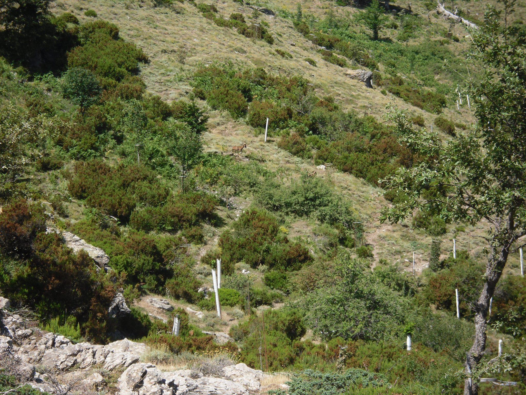 In Sardegna sul Gennargentu alla ricerca dei mufloni